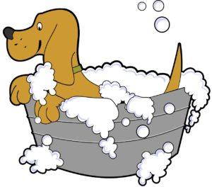 Illustration to wash dog