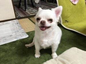 pictures of a dog 30-8-2-1